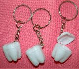 子供服 ◆◆◆ARF88★歯の小物入れキーホルダー 人体模型好きに・・